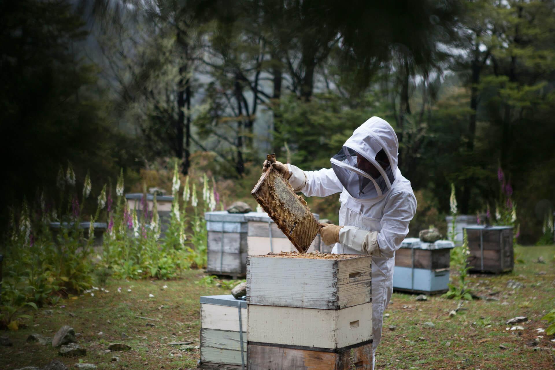 Les abeilles et leur habitat