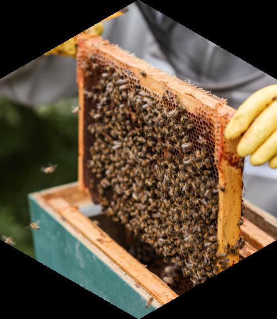 Chacun peut parrainer une ruche