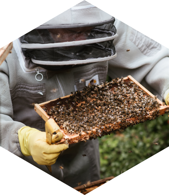 ApiAuvergne et le parrainage de ruche
